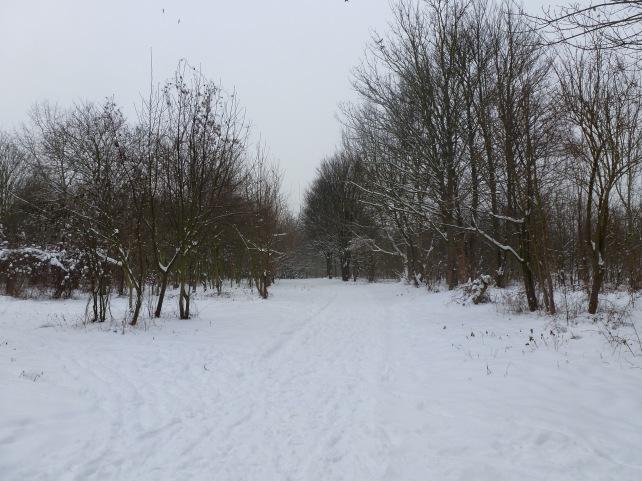 Forêt Port aux cerises - Essonne
